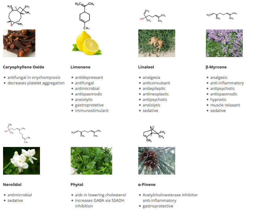 Researched actions associated with some cannabis sativa l terpenes